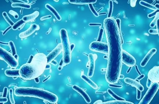 La taurine efficace contre les infections bactériennes