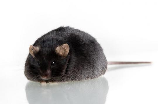 L'exposition aux pesticides fait grossir les souris : qu'en est-il chez les humains ?