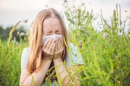 Allergie à l'ambroisie: l'alerte rouge déclenchée dans la région lyonnaise