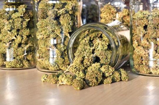 Cannabis légal : de plus en plus de \