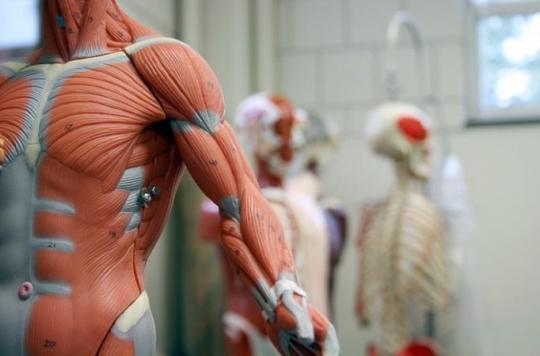 Le muscle est un moteur complexe