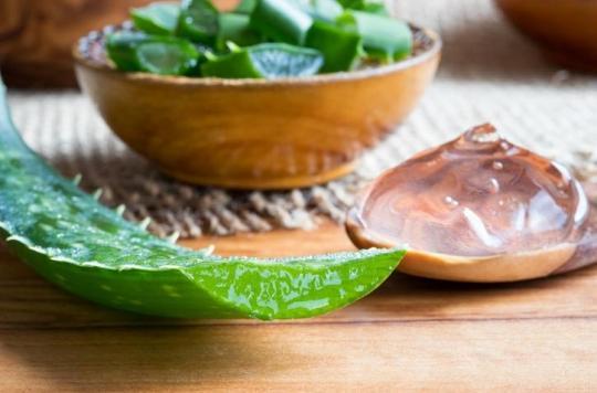 Attention, les feuilles fraîches d'aloe vera sont laxatives et potentiellement cancérigènes