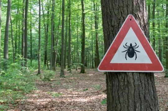 Maladie de Lyme : de nouveaux tests pour la détecter plus rapidement et mieux la traiter