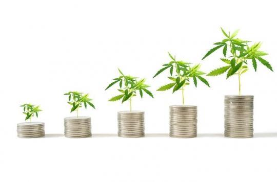 Cannabis : augmentation isolée des taux de THC potentiellement dangereuse