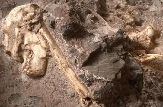Little Foot : l'australopithèque le plus vieux au monde livre ses premiers secrets