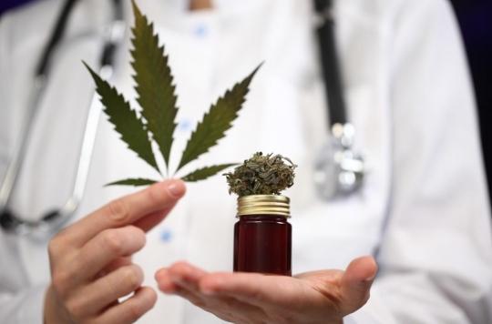 Cannabis thérapeutique : l'expérimentation devrait débuter en septembre