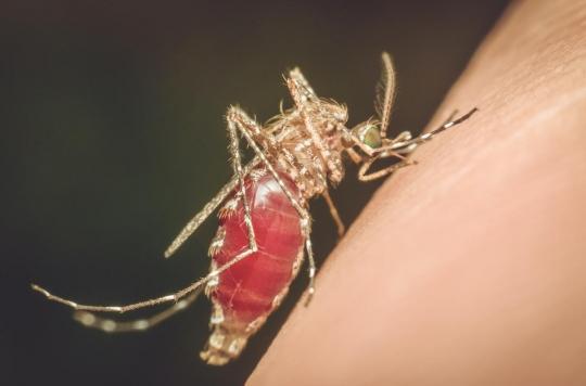 L'insuline pourrait jouer un rôle vital dans le contrôle des virus propagés par les moustiques