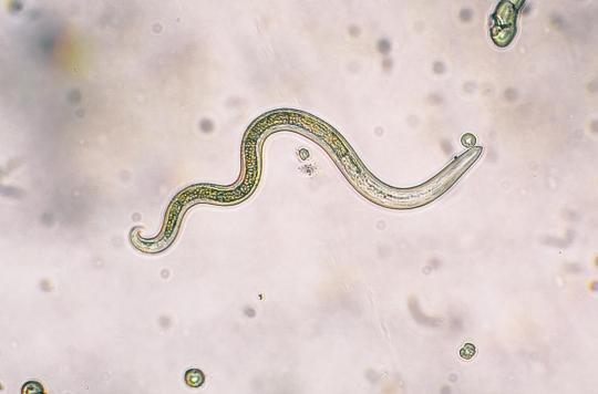 Plaidoyer pour les parasites
