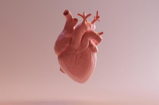 Des scientifiques créent un atlas des cellules du coeur