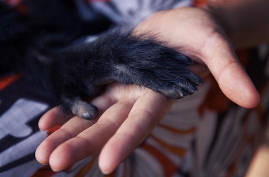 L'analyse génomique révèle que de nombreux animaux sont vulnérables à la Covid-19
