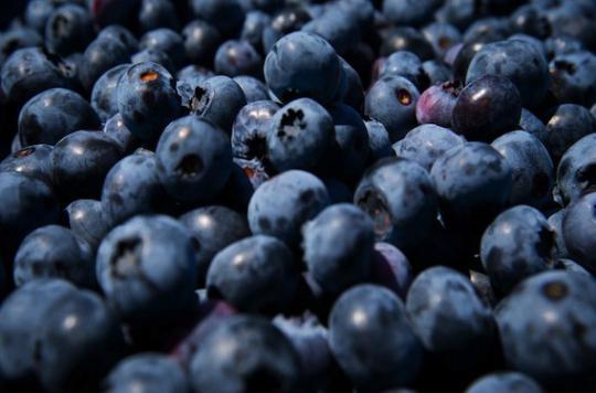 Myrtilles et vin rouge pour réduire les troubles de l'érection