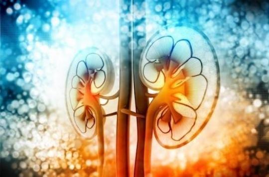 Cancer du rein : l'immunothérapie fait mieux qu'un anti-cancéreux spécifique