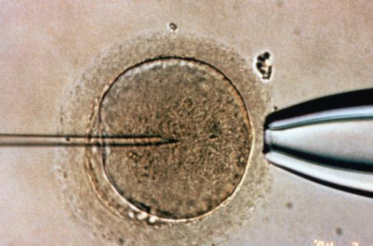Donneur de sperme : un droit à l'anonymat et un devoir moral