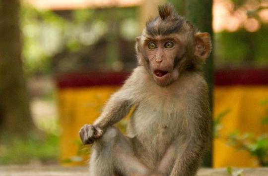 Macaques euthanasiés : la SPA « condamne fermement cet acte »