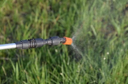 Glyphosate : Monsanto a établi un lien avec des cancers