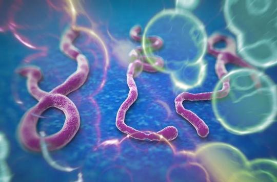 Ebola : deux anticorps prometteurs contre le virus