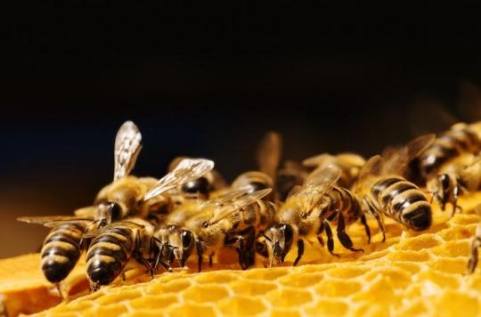 Pesticides : les trois quarts des miels sont contaminés