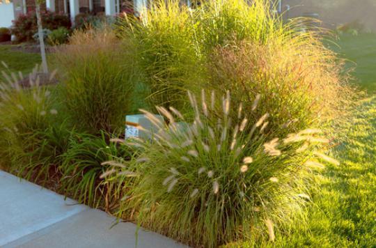 Allergies : l'alerte aux pollens  est lancée