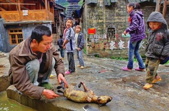 Taïwan : les chiens et les chats interdits à la consommation