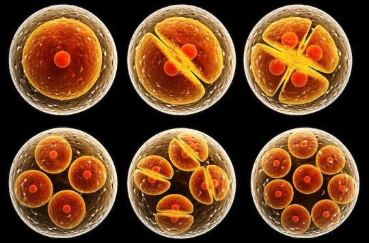 Des britanniques modifient l'ADN d'un embryon