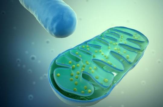Les cellules du corps humain peuvent chauffer jusqu'à 50°C