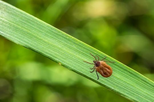 Maladie de Lyme : clarification dans le grand bazar des tests diagnostiques