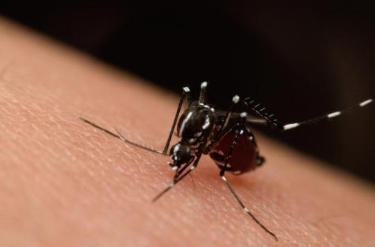 Zika : une application smartphone permet un diagnostic rapide