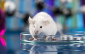 Recherche animale : pourquoi elle est encore nécessaire