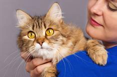 Maladie des griffes du chat : une bartonellose que l'on peut retrouver dans le Lyme chronique